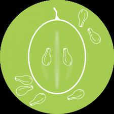 GrapeSeeds logo web round